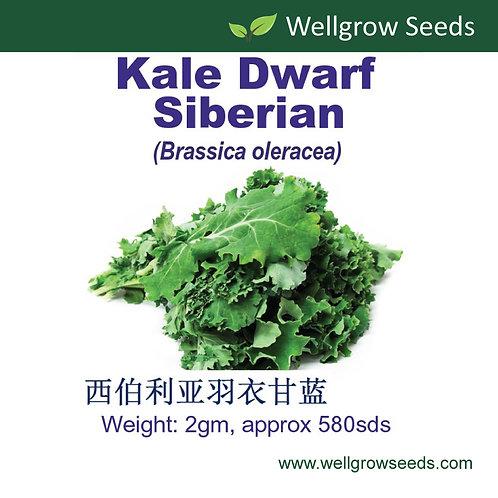Kale Dwarf Siberian