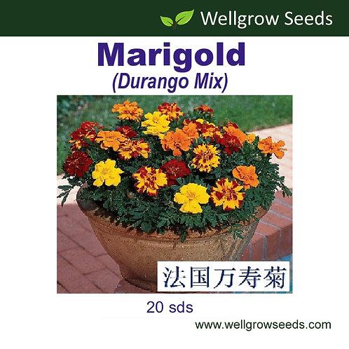 Marigold (Durango Mix)