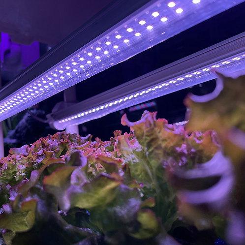 LED Grow Light (Full Spectrum, Double Roll)