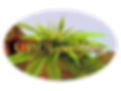 logo8_edited.png