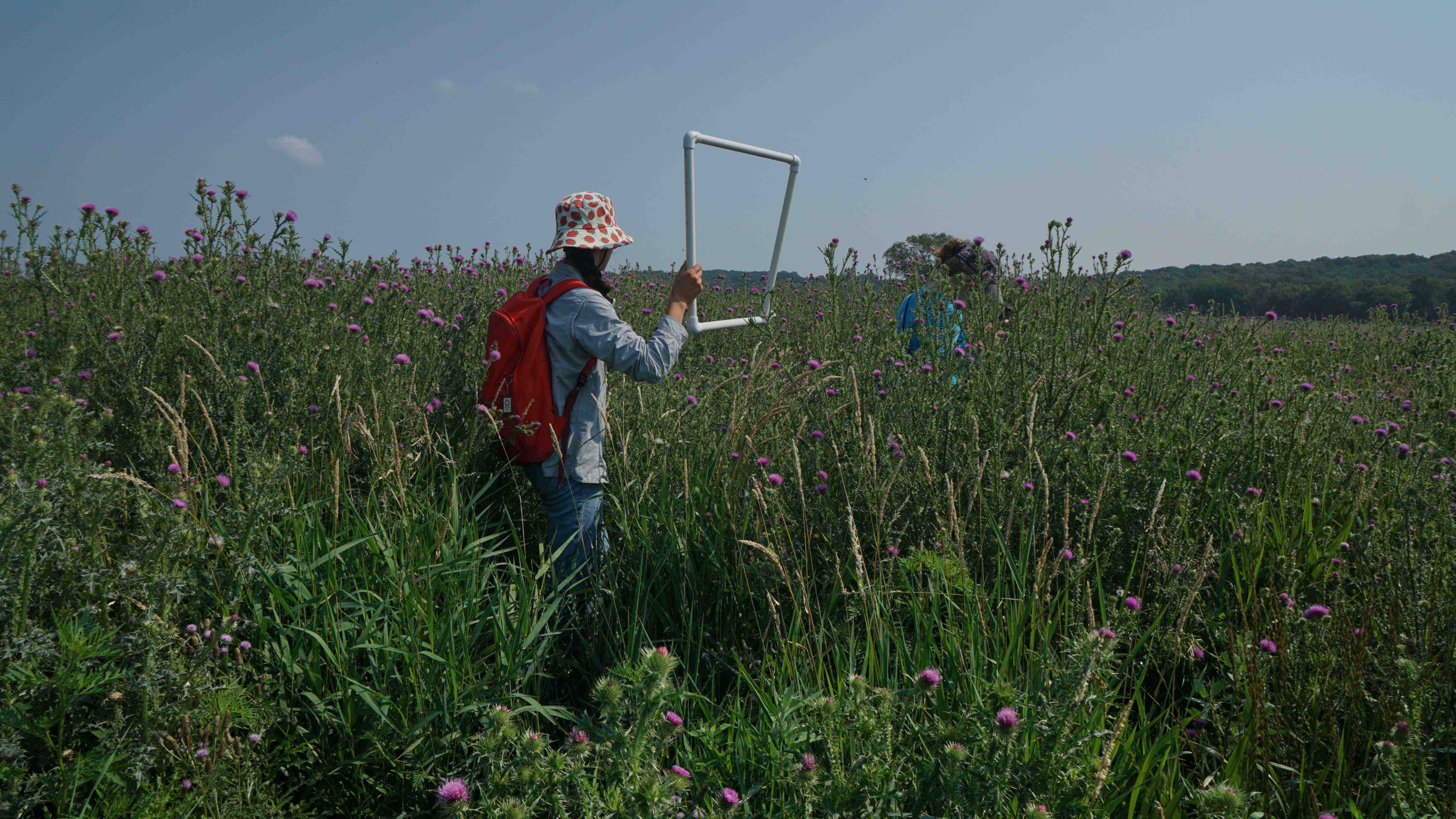 A photograph shows a person standing in a prairie fen, holding up a square frame made of pvc pipe. The person is wearing a red backpack, a blue shirt and pants, and a white bucket hat with strawberries printed on it. The PVC pipe frame is about 1' square, and the person holds it up with one tan hand. The frame contains a portion of the horizon. Another figure stands further away, their blue shirt obscured by the grasses that dwarf their height. The sky is clear and it is a sunny day.