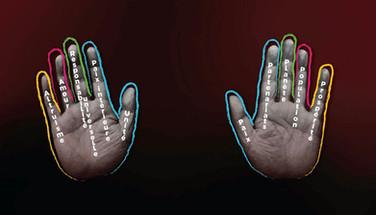 La Main du Cœur
