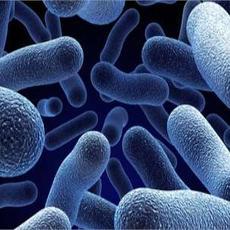 Infection Control Awareness (UK)