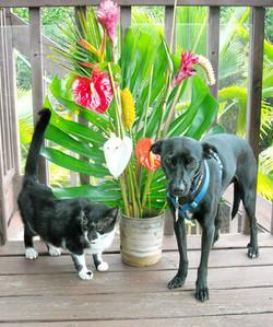 Kinsey and Ziggy