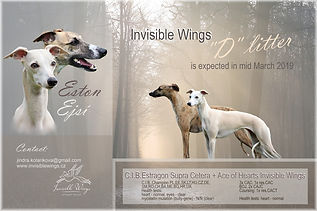 """""""D"""" litter Invisible Wings"""