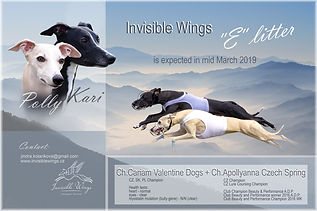 """""""E"""" litter Invisible Wings"""