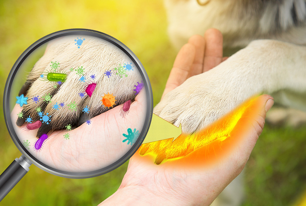 Germs in and on animals can get to you when interacting with them.