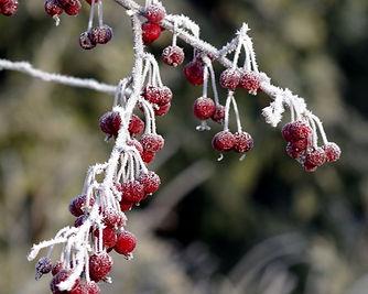 Frozen Fruit.jpg