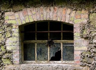 Broken Windows and Hearts