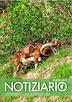 Notiziario del Comprensorio Alpino VCO1 - giugno 2017