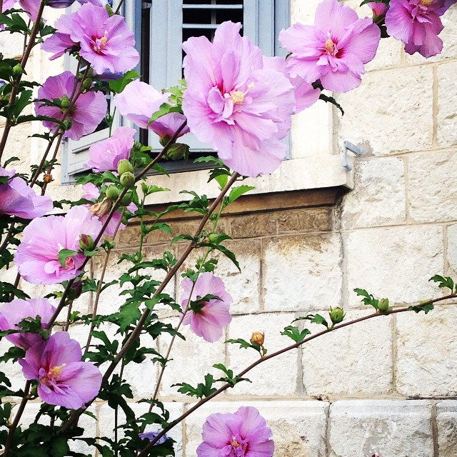 #beauty #nature #flowers #bloomingmarvellous #snappysnappy #croatia