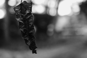 Wither—Photograph.