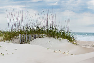 Sand Dunes and American Beachgrass at Em
