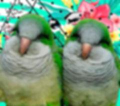 Calladitas%2520Sala%2520Ars%2520A3_edited_edited.jpg