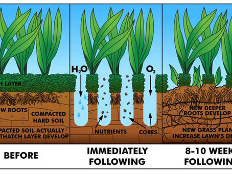 All About Aerating