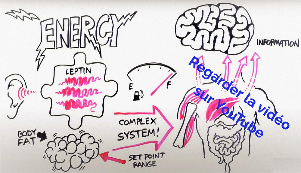 obésité système régulateur set point leptin
