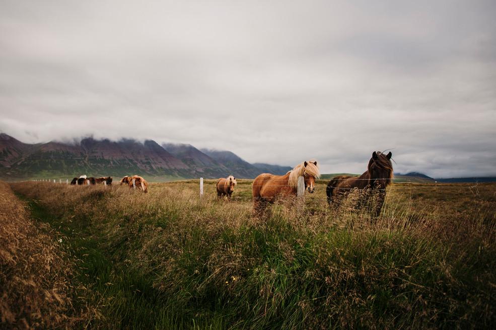 Islanda36.jpg