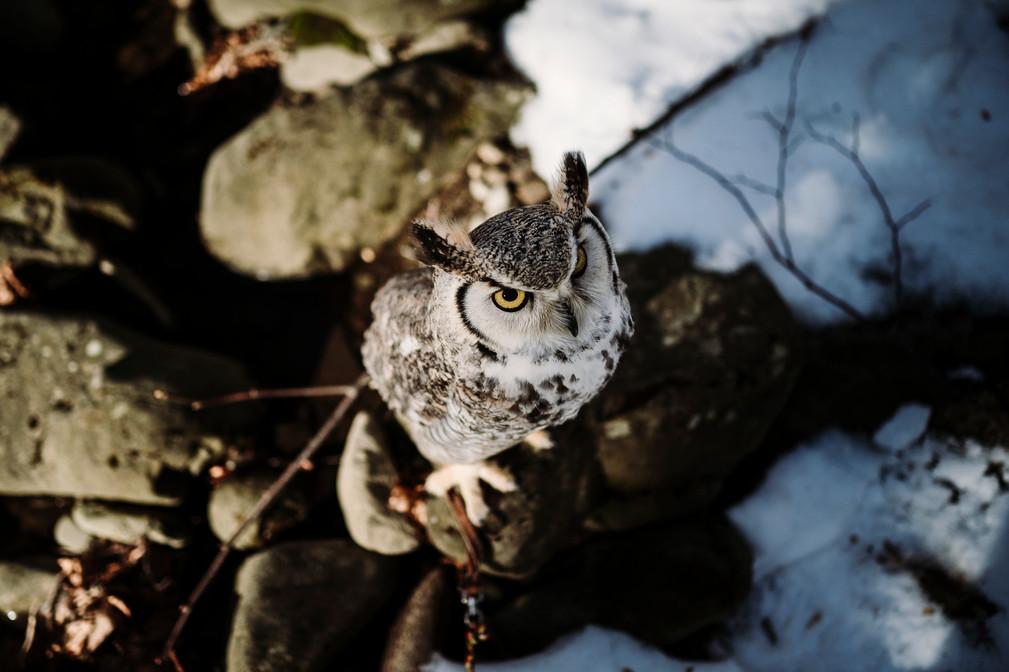 servizio fotografico nella neve4.jpg
