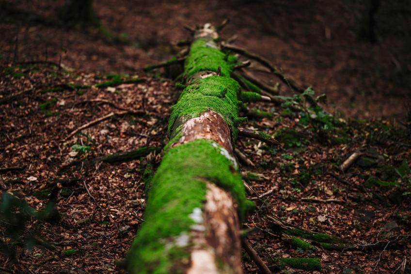 workshop foreste casentinesi 8.jpeg