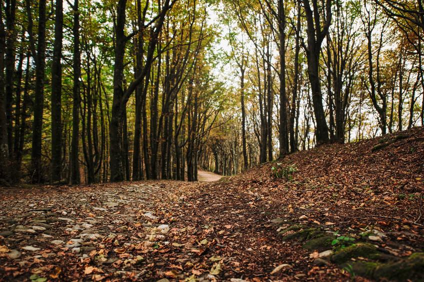 workshop foreste casentinesi 10.jpeg