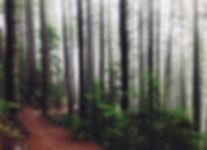 Wanderwege Eifel