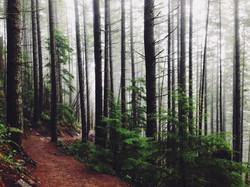 Waldpfäde erkunden