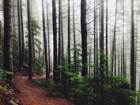 Finding a path forward