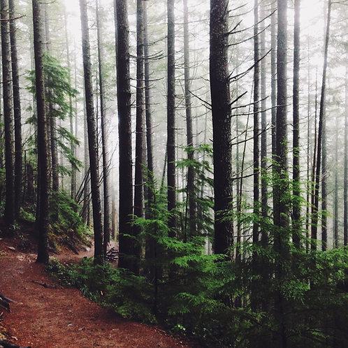 Deep Sleep in a Forest with Binaural Beats