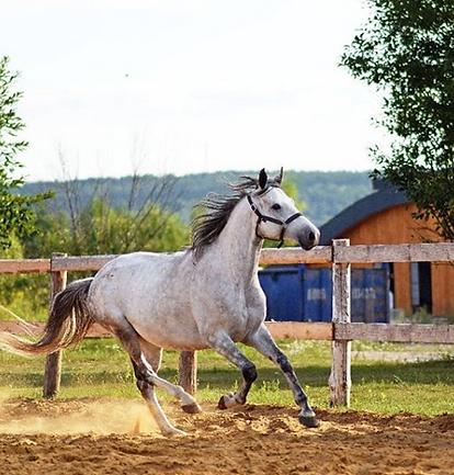 конный.PNG