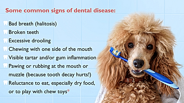 common signs of dental disease.png