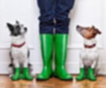 Dogs and Rainboots.jpg