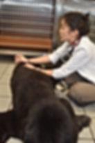 Animal acupuncture Island Veterinary Care