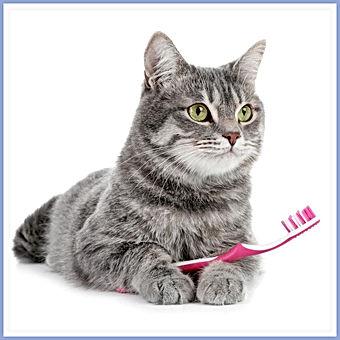cat brushing.jfif