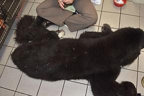 Dog Acupuncture Island Veterinary Care