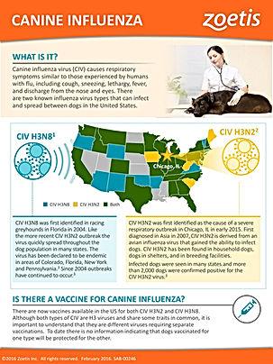 Canine Flu information Island Veterinary Care