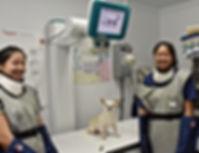 Veterinary X-ray Island Veterinary Care