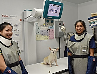 Veterinary X-ray Island Veterinary Care