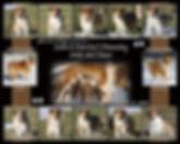 Lola litter collage 3-2-2018.jpg?height=