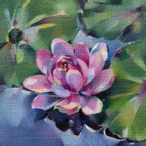 Pink Water Lily card & envelope