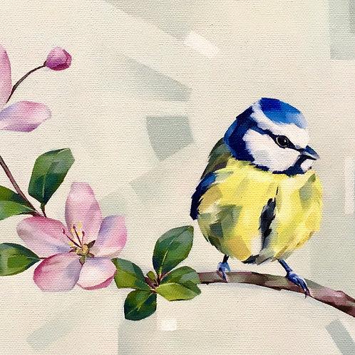 Blue Tit on Blossom card & envelope