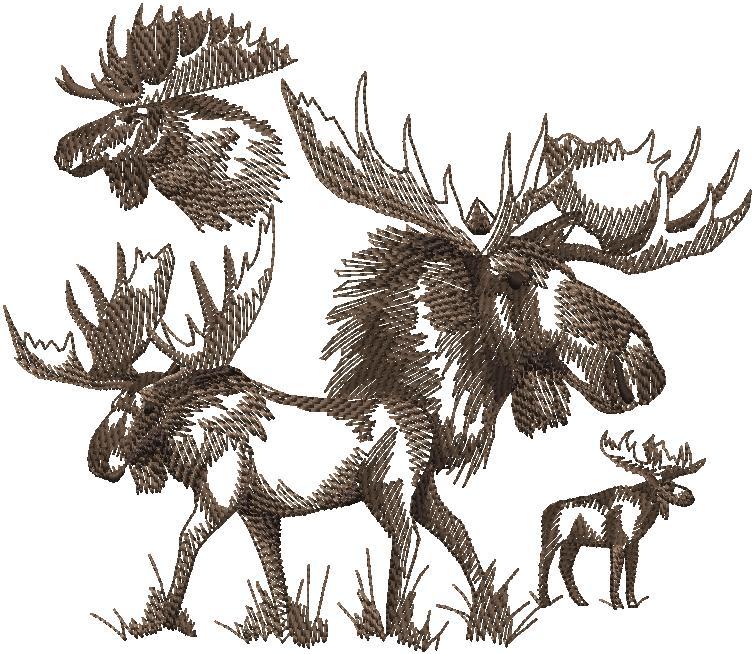 f6903 Sketched Moose