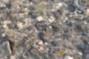 Biological-Soil-Crust-2.jpg