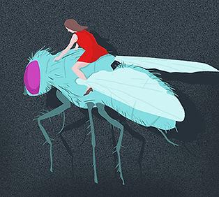 Death_Fly.jpg