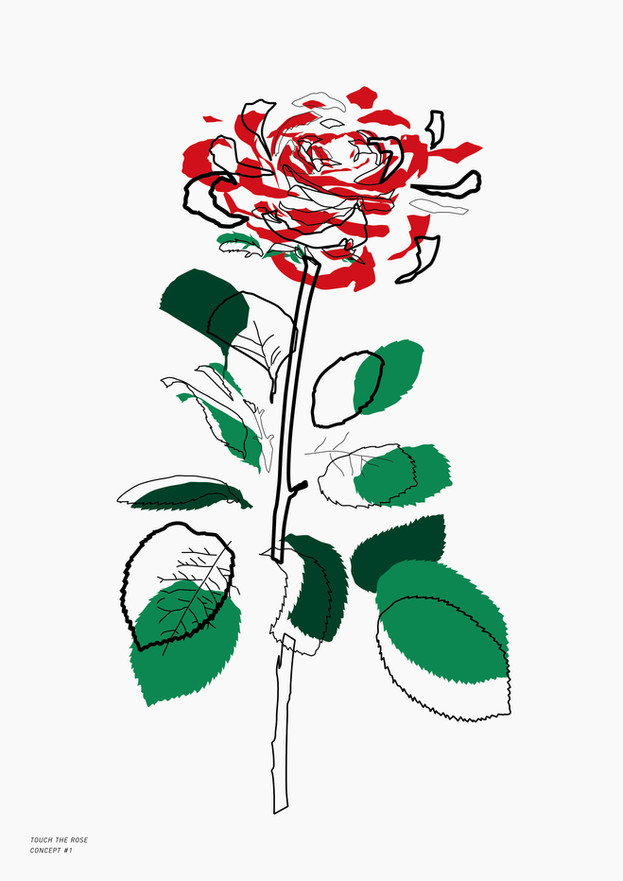 Study Of Rose_1