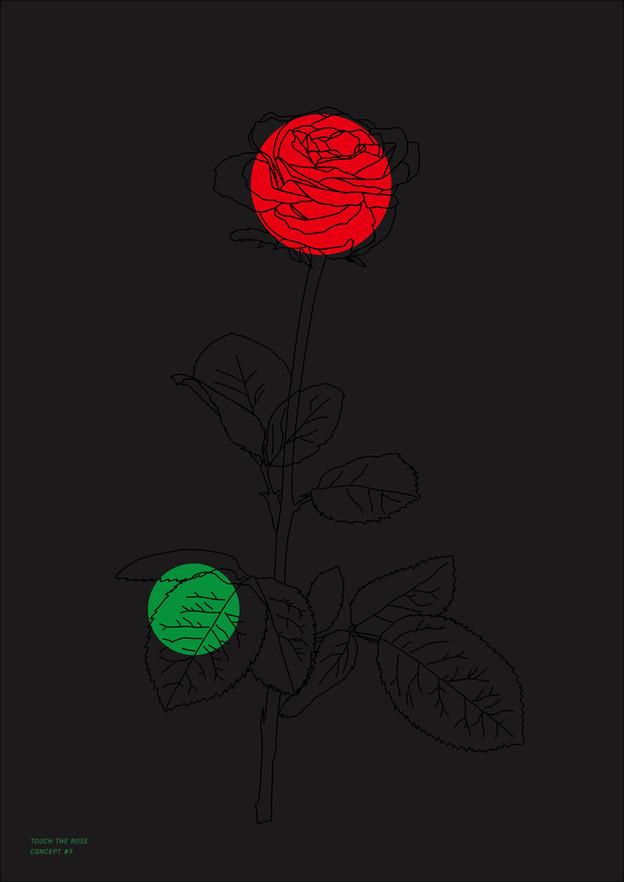 Study Of Rose_6
