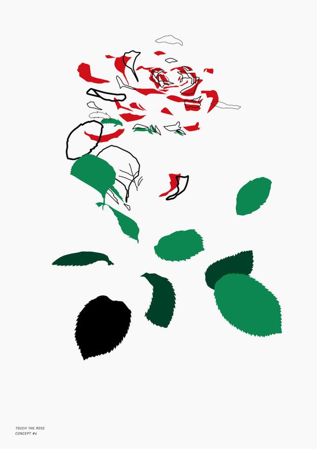 Study Of Rose_2