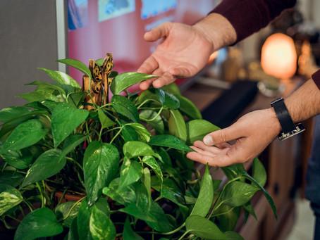 As plantas possuem consciência?