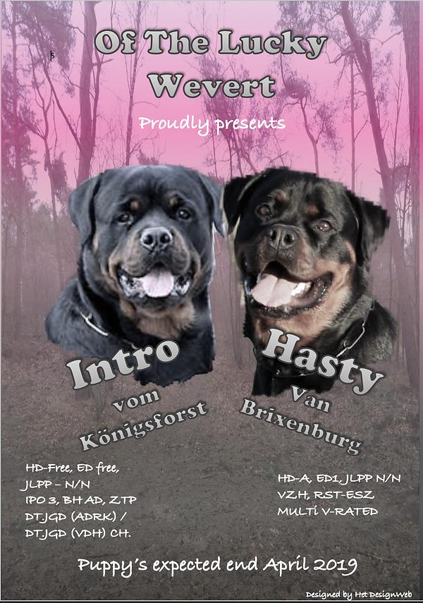 Hasty en Intro