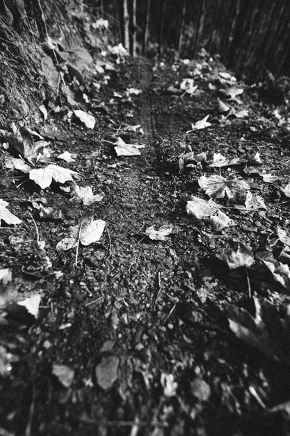 conor atown autumn sml-24.jpg