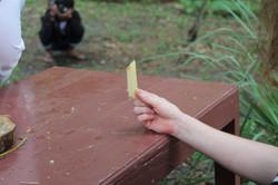 Untitled (Sugarcane piece)
